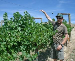 081413 FD wine artr Horst
