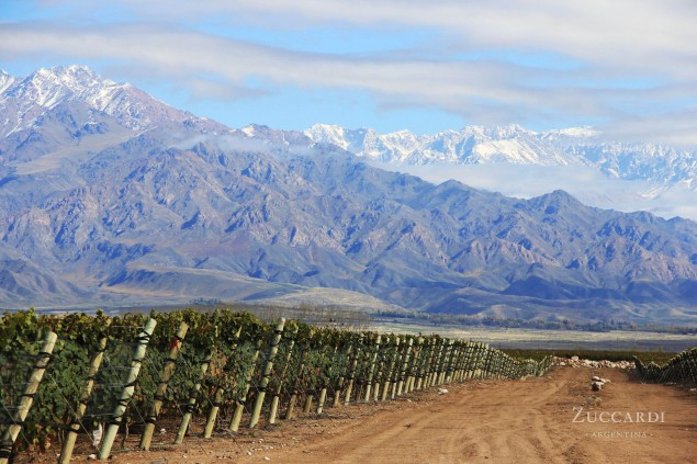 The Zuccardi vineyards in Mendoza lie in the alluvial soils at the foot of the Andes.