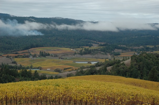 The view of Northern California's  Anderson Valley shows the coastal influence of cool, foggy mornings, perfect for producing world-class Pinot Noir and Alsatian varietals.