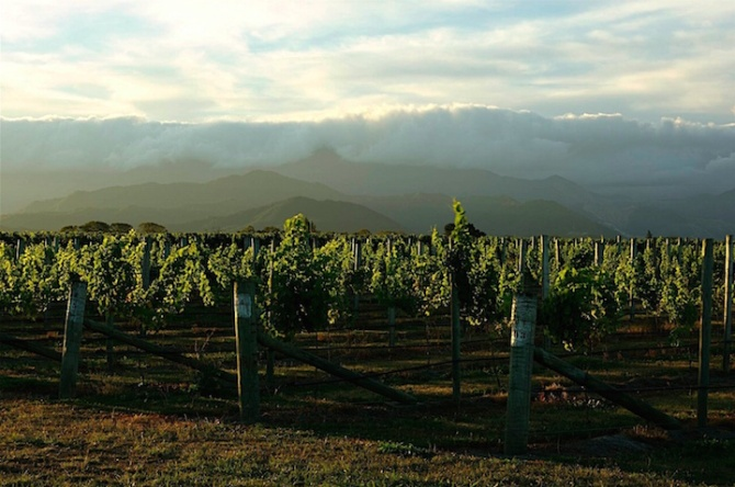 The wine-growing region of Marlborough on New Zealand's South Island is famed for its Sauvignon Blanc, which makes up 86 percent of New Zealand's wine exports.