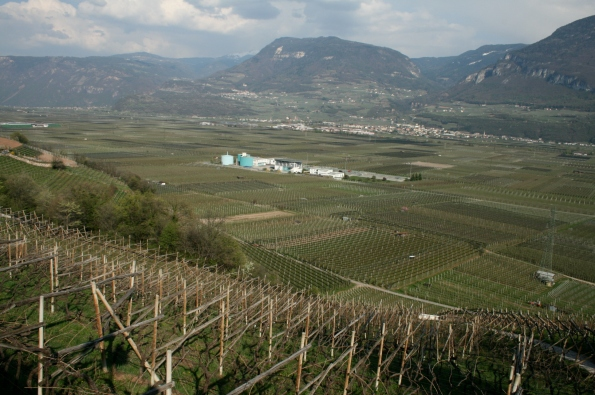 Miles of vineyards (here seen in early spring) span the immense valley making up the Alto Adige region of northern Italy.