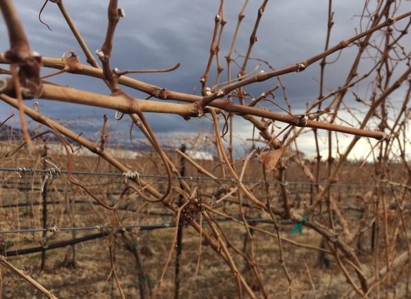february-vines-4