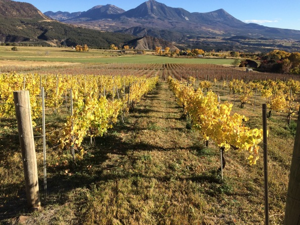Fall chardonnay