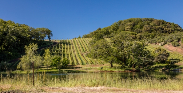 Bonterra vineyard hill-copy